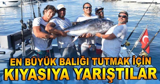 En büyük balığı tutmak için kıyasıya yarıştılar